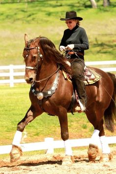 Rare Red Friesian with Diane Olds Rossi