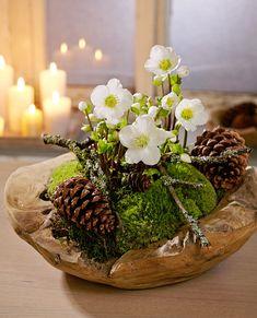 Hellebore- Christrose Christmas rose … Christmas rose More - Christmas Flowers, Christmas Wreaths, Christmas Crafts, Christmas Decorations, Xmas, Holiday Decor, Christmas Christmas, Christmas Arrangements, Floral Arrangements