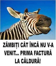 Inca, Animals And Pets, Humor, Memes, Funny, Pets, Humour, Meme, Funny Photos