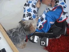 But, it took some time to get it right! She started off a little rusty… | When This Yorkie Notices His Owner Wasn't Covered Up He Decided To Tuck Him In