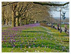 Spring - Szczecin, Poland