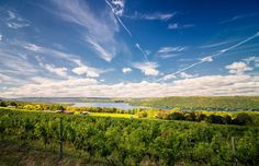 McGregor Vineyard, Upstate New York Vineyards