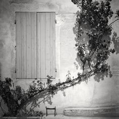 Rosa Wichuraiana, France 2018 - No.: 18035 Toned gelatin silver print, hand signed, dated and numbered edition of 9 edition of 9 edition of 7 edition of 5 Film Photography, Landscape Photography, Panorama Camera, Gelatin Silver Print, Fine Art Paper, Exhibitions, France, Prints, Painting