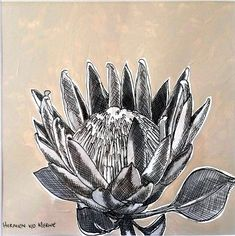 Title: Fynbos: Table Mountain Fynbos 17 Medium: Pen-and-Ink drawing on paper with oil paint background Size: 200 x Vincent Van Gogh, Mountain Drawing, Table Mountain, Hardy Plants, Paint Background, Plant Art, Plant Illustration, Ink Illustrations, Amazing Flowers