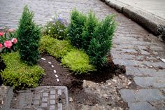 Take a detour from your regularly paved pathway: Steve Wheen pothole garden. #UrbanGardening #Giving #SummerofDoing