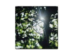 Wald Sonnenstrahlen Untersetzer