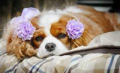 Burlap Rose Snap-In Dog Bows® Flower MEDIUM Hot Pink Dog