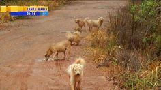 """""""O GRITO DO BICHO"""": Grupo de 50 cães abandonados é encontrado na ERS-0... #ogritodobicho #falabicho"""