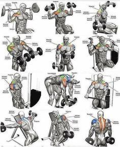 Schulter – Training n Fitness 2019 Gym Workout Chart, Gym Workout Tips, Dumbbell Workout, Fitness Workouts, At Home Workouts, Workout Women, Shoulder Workout Routine, Shoulder Workouts For Men, Workout Posters
