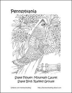 pennsylvania state flower coloring pages - photo#24