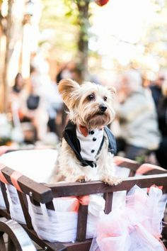How adorable is this ring bearer??? {Stephanie + Cory's Elegant Autumn Wedding}
