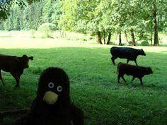 Erwin entdeckt Tiere!