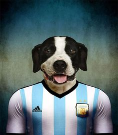 Dogs-of-World-Cup-Brazil-2014-2