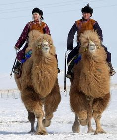 I went on a couple camel rides as a kid