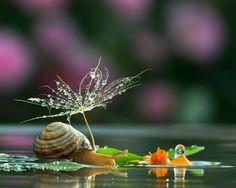 The Secret Life of Snails