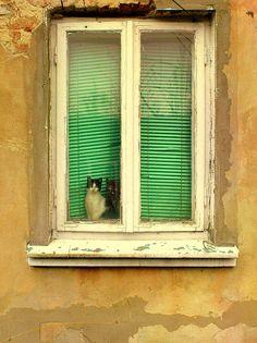 cats by stempel*, via Flickr