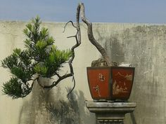 Sumatra Utara,  Medan,  local bonsai artists and trees of his garden - this nice day and unexpected meeting brought me to his house!