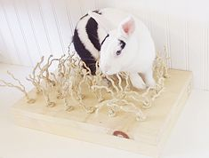 Sisal Carpet Chewing and Digging Station : Pet Rabbit Toys, Homemade Toys for Rabbits $29.97