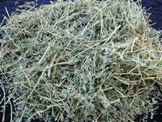 Managing Carbohydrates in Your Horse's Diet