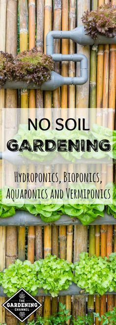 Learn how to have better control over growing food with no soil gardening. Try Hydroponics, Bioponics, Aquaponics and Vermiponics.