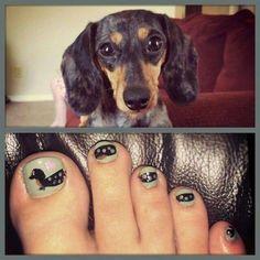 doxie toenails