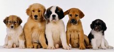Stomp out Puppy Mills (Audio)