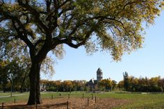 An old elm tree in Winnipeg's Assiniboine Park, known as 'Grandma Elm' was cut down on Tuesday morning due to Dutch Elm Disease. All About Canada, Elm Tree, Win A Trip, Historical Sites, Four Seasons, Continents, Great Places, Tourism, Places To Visit