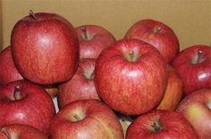 <フジ>世界に誇る日本のフルーツがリンゴのフジ。青森県藤崎町で誕生したフジは、国外にもさかんに輸出されていて、海外でも「FUJI」の名前で呼ばれ、日本のフルーツの代表としてすっかり認知されています。海外出張でマルシェなどで目にするたび、自慢したい気持ちに。Photo:AFLO【25ans編集長 十河ひろ美】  http://lexus.jp/cp/10editors/contents/25ans/index.html  ※掲載写真の権利及び管理責任は各編集部にあります。LEXUS pinterestに投稿されたコメントは、LEXUSの基準により取り下げる場合があります。