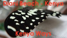 Diani Beach Kenya, Travel Videos, Boutique, Desserts, Food, Tailgate Desserts, Deserts, Boutiques, Meals