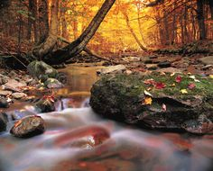 Golden fall (autumn) forest with flwoing water stream in Cape Breton Highlands National Park, Nova Scotia, Canada. Fall Pictures, Fall Photos, Pretty Pictures, Cap Breton, Forest Falls, Cabot Trail, Rio, Gb Bilder, Nova Scotia