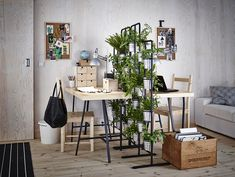 Viete, ktoré rastliny vás doma ochránia pred škodlivými látkami? | Môjdom.sk Ikea, Radiant Heating System, Led Panel Light, Christmas Arrangements, Green Theme, Co Working, Types Of Flooring, Indoor Planters, Diy Garden Decor
