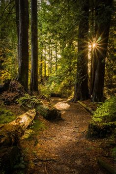 A Walk In The Forest Photo Contest Winners Blog - ViewBug.com