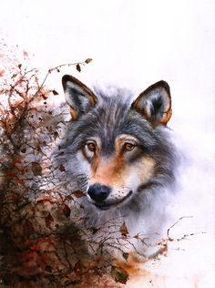Outlawed - wolf painting by Peter Williams