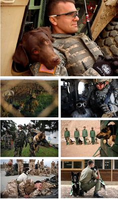 """War Dogs of the World Hope you're doing well.. From your friends at phoenix dog in home dog training""""k9katelynn"""" see more about Scottsdale dog training at k9katelynn.com! Pinterest with over 21,000 followers! Google plus with over 180,000 views! You tube with over 500 videos and 60,000 views!! LinkedIn over 9,300 associates! Proudly Serving the valley for 11 plus years! Now join us on instant gram! K9katelynn"""