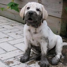 No, I wasn't playing in the mud.  Why do you ask?