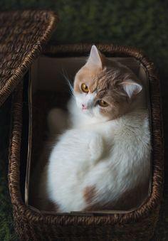 It's my box now (by torode) ~ Sweet Dreams beautiful friends ♥