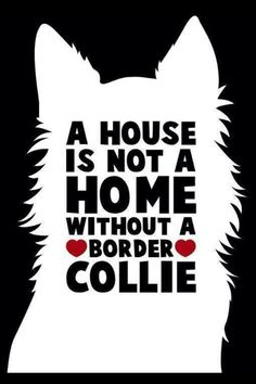 A house is not a home without a #Border #Collie