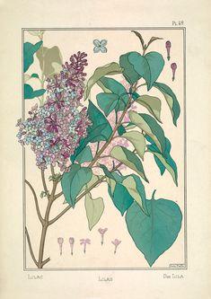 Illustration Botanique, Plant Illustration, Botanical Illustration, Fleurs Art Nouveau, Art Nouveau Flowers, Plant Aesthetic, Aesthetic Art, Fine Art Prints, Framed Prints