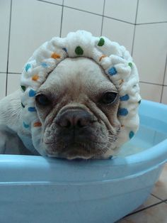 I think my Whimsey would rather die than put up with this humiliation...lol.  But it's cute on this one!