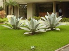 Aloe and grass.