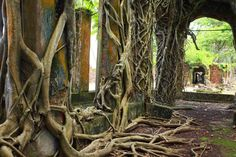 Andaman Islands_old trees and brick houses sailing trip_XS. Andaman Islands, Sailing Trips, Old Trees, Archipelago, Brick Houses, Journey, Boat, The Incredibles, India