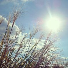 Home Decor Fine Art Photo Called Sunny by ChaiseLongueGallery, $10.00