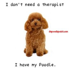 I DONT NEED A THERAPIST I HAVE MY POODLE