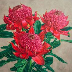 Waratah Painting - Red Waratah Beauty 3 by Fiona Craig Australian Wildflowers, Australian Native Flowers, Australian Artists, Australian Plants, Art Floral, Floral Artwork, Illustration Blume, Botanical Illustration, Botanical Prints