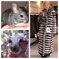 Stop and think about where the fur comes from. This is awful, just awful! How many animals had to suffer for that fur coat?ugly coat for UGLY PEOPLE Stop Animal Cruelty, Animal Testing, Mon Combat, Social Awareness, Hate People, Save Animals, All Gods Creatures, Animal Welfare, Animal Rights