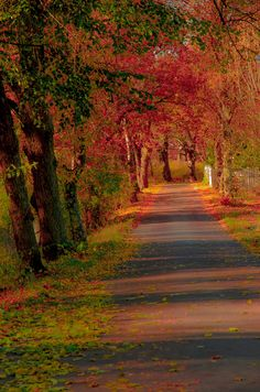 Walking down a path this beautiful... It's an escape for my mind