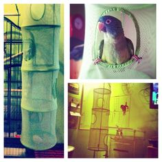 This is such a great idea! Portable, cheap, and easy to store play area for your bird! You could add some hanging toys and foot toys! #conure #parrot - Saw this on Instagram: credit glo_vig