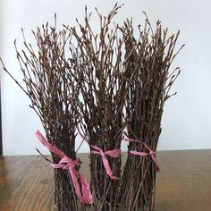 Natural BIRCH Twigs, rustic decor