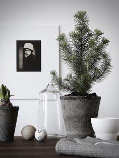 5 beautifully, Minimalist Christmas Trees