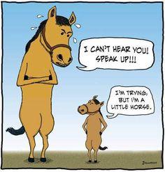 A little horse...